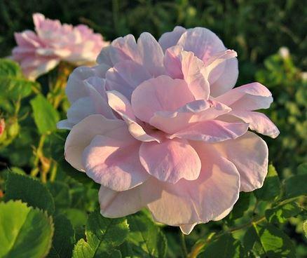 Цветотип лето, летний цветотип внешности