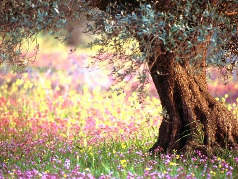 цвета цветотипа весны