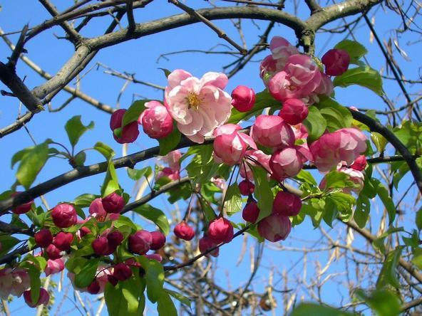 цветотип весна описание